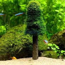 Tank Aquascape Simulation Xmas Moss Christmas Tree Plant Grow Aquarium Tank