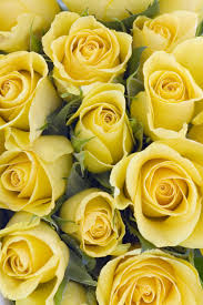 14 color meanings what do the colors of roses for