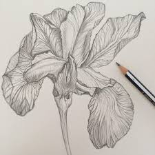 magical iris floral study skillshare projects