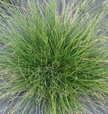 상의 landscapes ornamental grasses for cold climate에