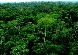 canopy amazon countless connections in peru s amazon rainforestoic moments oic