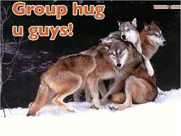 Group Hug Meme - 24 most funny wolf images
