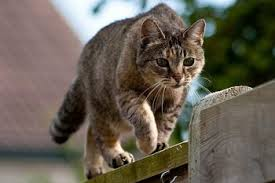 How To Keep Cats Off Outdoor Furniture by 10 Ways To Keep Cats Out Of Your Yard