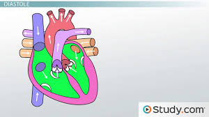 anatomy of the heart blood flow and parts video u0026 lesson