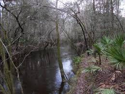 north fork black creek trail florida alltrails com