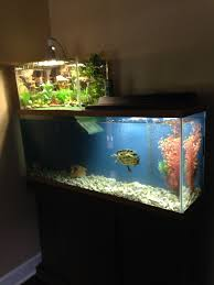 Aquarium Decoration Ideas Freshwater 55 Gallon Tank With 10 Gallon Basking Area For My African Sideneck