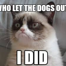 Who Let The Dogs Out Meme - who let the cats out the best cat 2018