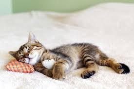 Cute Cat Meme Generator - cat pictures cute animal pictures and videos blog