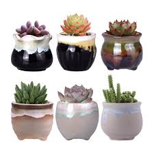 Kitchen Cactus Amazon Com Wituse Small Planters Cactus Planter Small Cactus Pot