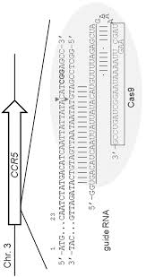 patent wo2014065596a1 composition for cleaving a target dna