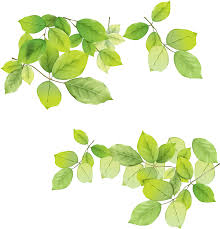 White Flag With Green Leaves Download Green Leaves Free Png Photo Images And Clipart Freepngimg