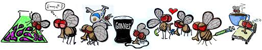 cartoon no alcohol bringing life into biology lessons using the fruit fly drosophila