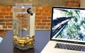 Fish Tank Desk by Noclean Aquariums Betta Fish Tank Youtube