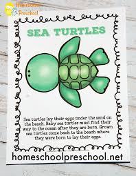 preschool sea turtle cycle printable unit study