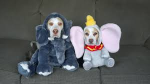 17 dog costumes for halloween penny and maymo style dog fancast