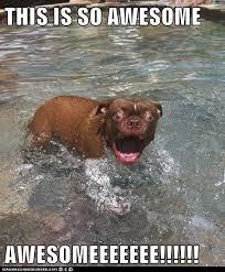 Swimming Pool Meme - i has a hotdog swimming pool funny dog pictures dog memes