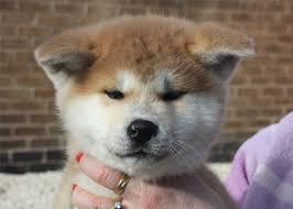 top 5 cutest dog breeds all over the world adogbreeds com