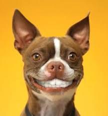 Dog Teeth Meme - dog with human teeth quickmeme