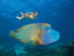 agincourt reef attraction queensland