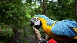 Parrot Decorations Home The Painful Truth About Biting And Pet Birds