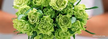 green roses covers fb covers timeline covers