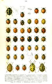 91 best ladybugs images on pinterest vintage illustrations