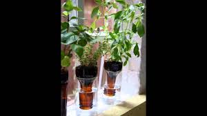 indoor gardening supplies best plants for hydroponic growing