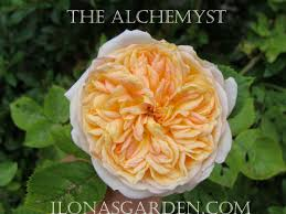 scented flowers create garden pleasure