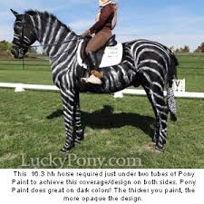 Halloween Costumes Horse 165 Horse Costume Images Horses Horse
