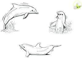 Coloriage magique mandala dauphin  Bondless