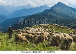 Sheep Herd On Green Pasture Dolomiti Stock Photo 746575915