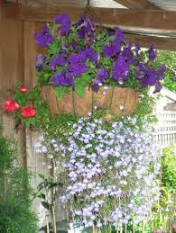hanging flowers 70 hanging flower planter ideas photos and top 10
