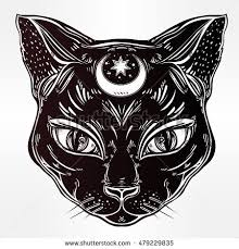 cat stock images royalty free images vectors