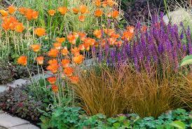 senecio mandraliscae search planting combinations