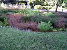 native plants for rain gardens rain gardens deer creek watershed alliance