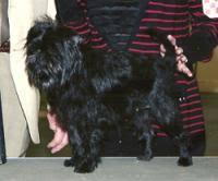 affenpinscher near me find dog u0026 cat breeders near you