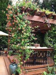 Arbors And Pergolas by 19 Best Pergola Plants Climbing Plants For Pergolas And Arbors