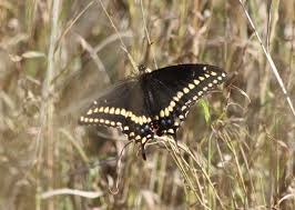in the news national butterfly center mission texas a project