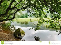 rock and overhanging tree by lake royalty free stock photos