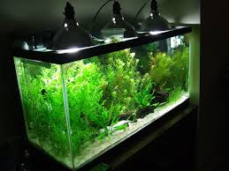 55 gallon aquarium light my inexpensive cfl light solution the planted tank forum