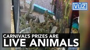kendall lexus of alaska animal prizes 1492548227 jpg