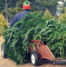 christmas tree farms opening this week statewide the middletown
