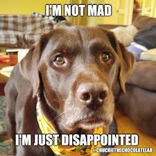 Disappointed Dog Meme - i m not mad in just disappointed imgflip