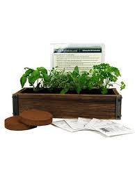 herb garden planter amazon com reclaimed barnwood planter box mini herb garden kit