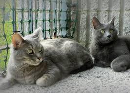 cat proof balcony netting