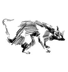 rat vector images over 3 300