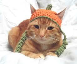 Cat Halloween Costumes Cats Crochet Cat Hat Halloween Pumpkin Hat Cats Cat Halloween