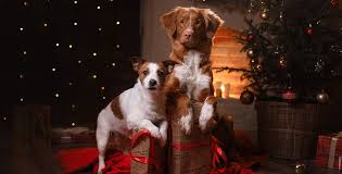 dog christmas top 5 christmas gifts for your dog breaded cats
