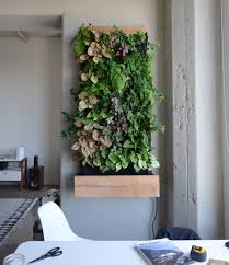 self watering vertical gardens are the lazy way to make your home