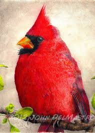 aceo atc size print color pencil drawing cardinal bird by blowups